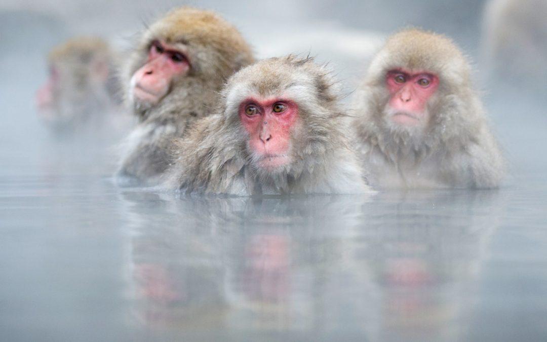 Japanin Lumiapinat ja kurjet Helmikuu 2020