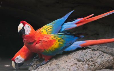 Galapagossaaret ja Ecuadorin Amazon 27.11.-13.12.2019