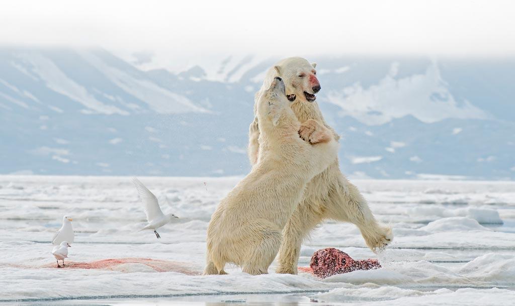 Huippuvuoret ja jääkarhut 7.-18.6.2021