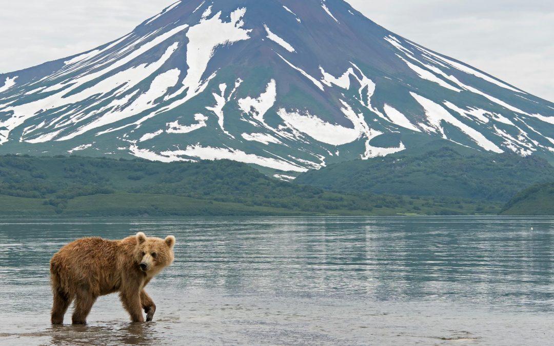 Kamchatkan karhut & tulivuoret 15.-30.7.2019