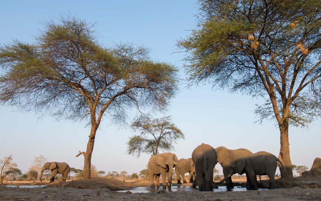 Botswana & Viktorian putoukset 25.3.-6.4.2020